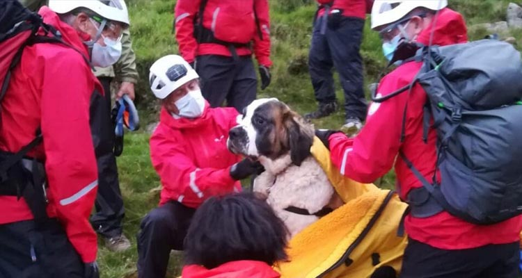 55kg St Bernard rescued from Scafell Pike by Wasdale Mountain Rescue Team