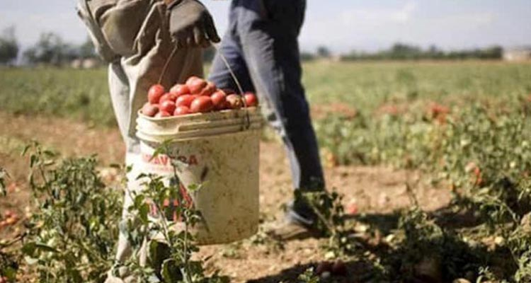 Italian agricultural employers blackmail undocumented workers for legal papers