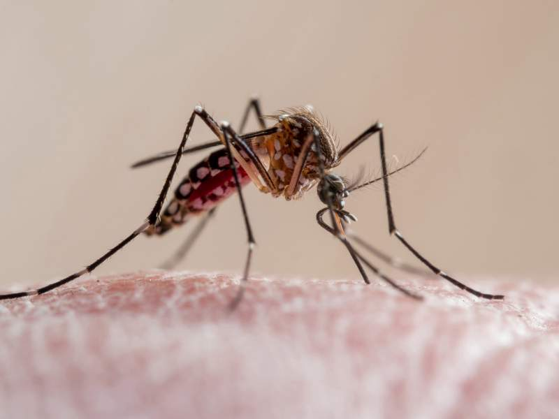 Nile Fever STRIKING Spain adding further misery to the country as mosquitoes go on the rampage and head to the Costa del Sol
