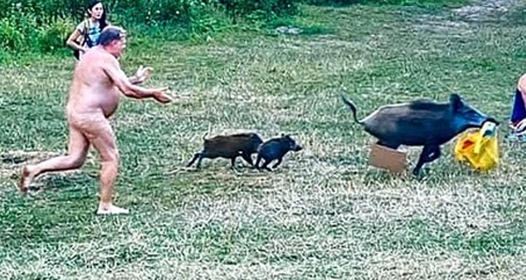 Naked man chases a wild boar through a Berlin public park