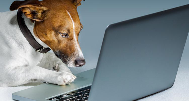 Write to us at admin@global247news.com if you have an older dog or other related stories!