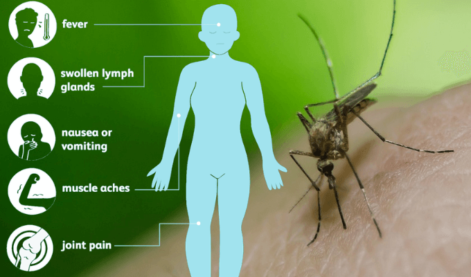 New death threat as deadly mosquitoes from Africa fly to Spain infecting people and animals in Andalucia