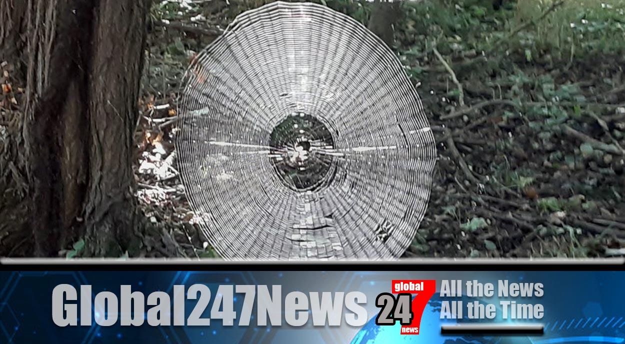 "Spider web found in Missouri forest big enough to ""catch"" a person"