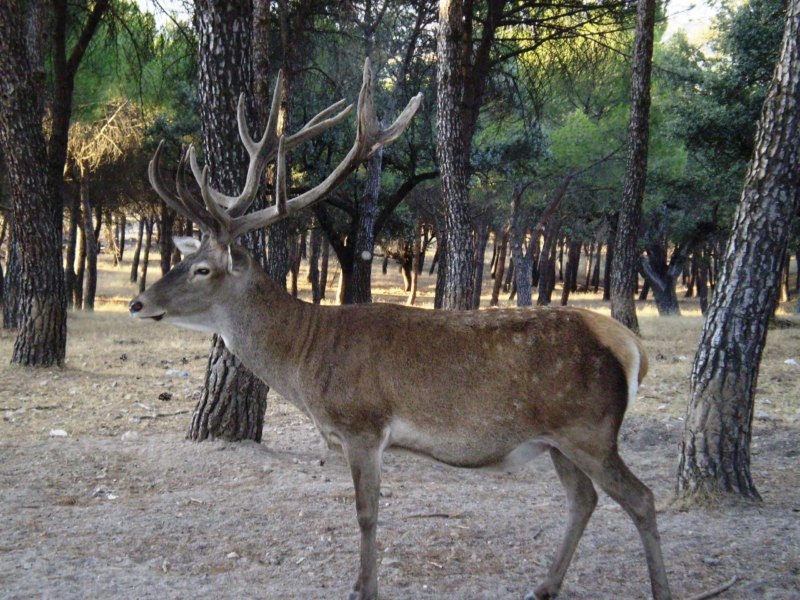 Hunting BANNED In Spain's National Parks But Fuengirola Campaigner says 'It's Not Enough'