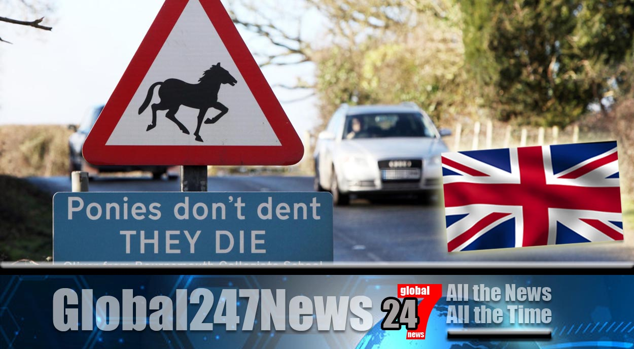 Four ponies killed by Land Rover in the New Forest