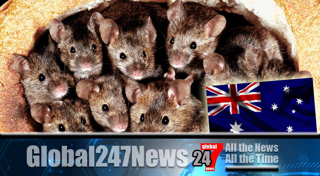 Mice plague in New South Wales