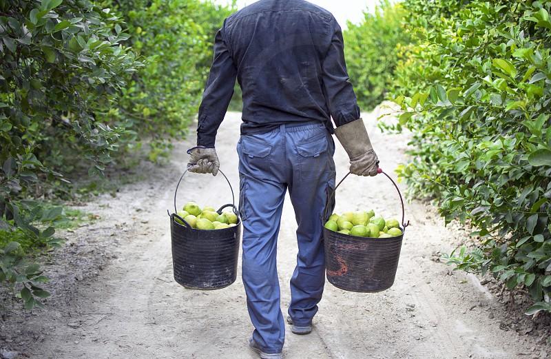 Spain's Costa Blanca Plays It's Part As Lemon Sales ROCKET 20 Percent